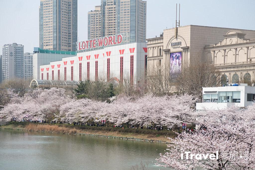 首尔赏樱景点 乐天塔石村湖 (35)