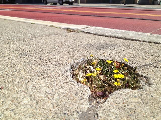 Emerging weeds