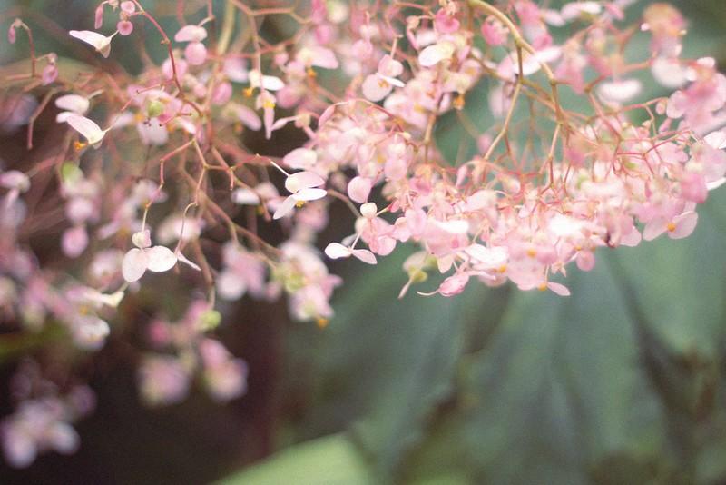 estufa fria flower