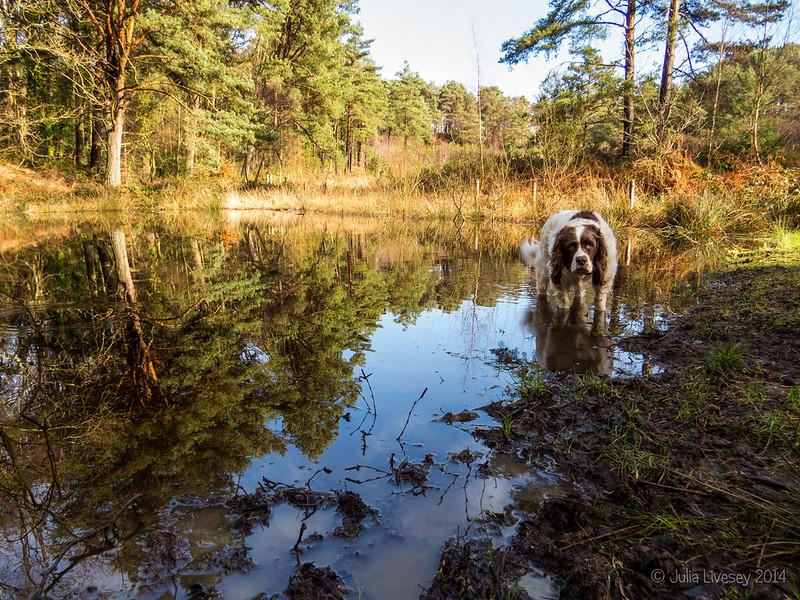 Max at Pond # 1
