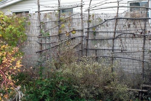 Fence Trellis Fall