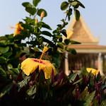 02 Phnom Penh 37