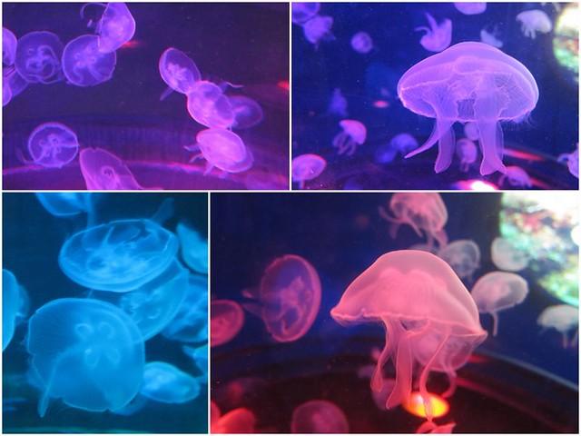 Ocean-Park-Meduses