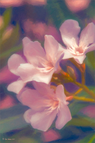 Soft Pink Flowers using Topaz ReStyle and Alien Skin Snap Art