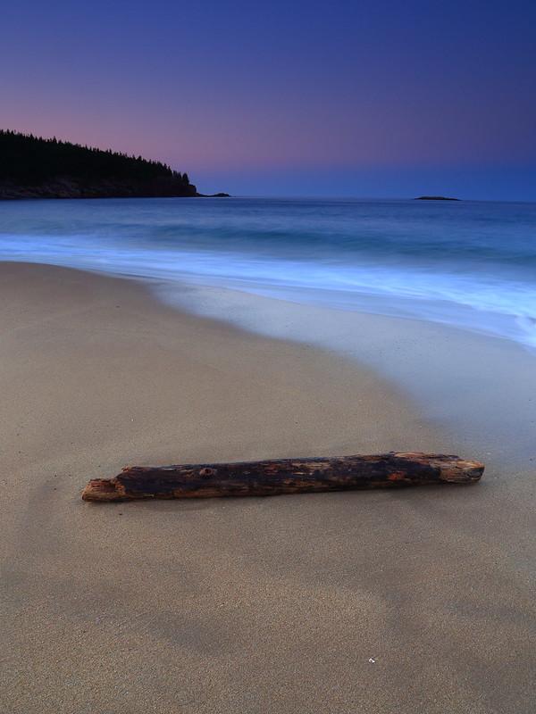 Sand Beach Drift Wood - Acadia National Park