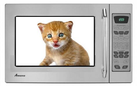 Kitten In A Microwave