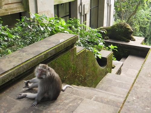 monkey, lion