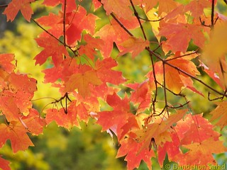 Beautiful Fall Day 2013