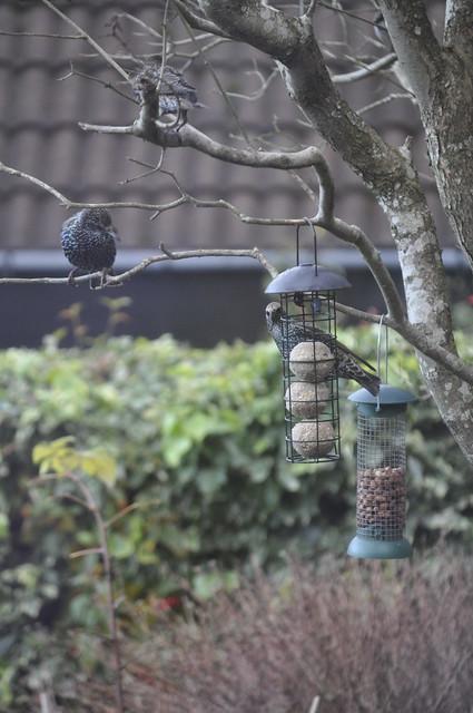 2013-11-24 Birdies