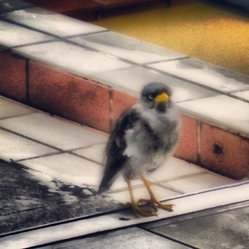 Some kind of bird outside The Coffee Bean #singapore by @MySoDotCom