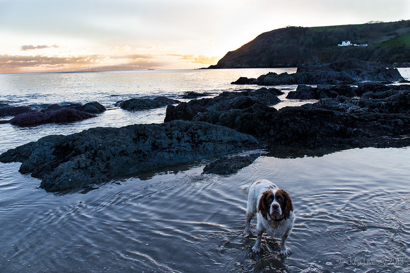 Max, Talland Bay, Cornwall