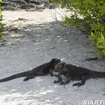 Viajefilos en San Cristobal, Galapagos 040