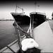 Rotterdam Harbour II