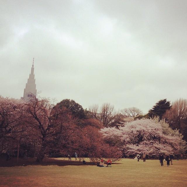 Shinjuku-Gyoen #sakura #spring #japan #cherryblossoms