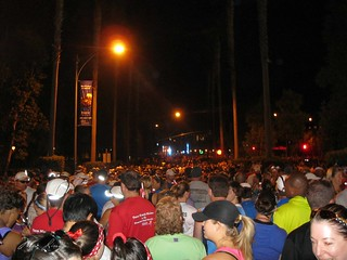 crowds in corral d