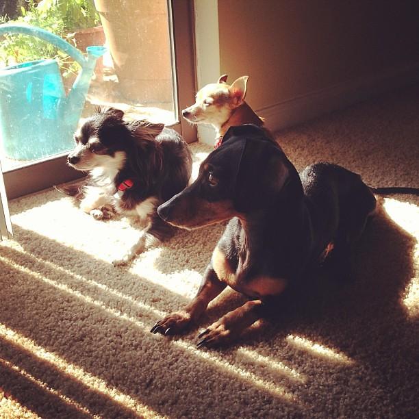 More sunbeam lounging