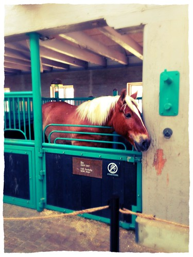 Bo, one of the Carlsberg Horses by SpatzMe