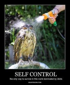 meme owl shower