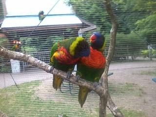Birds, Unknown, Erie Zoo