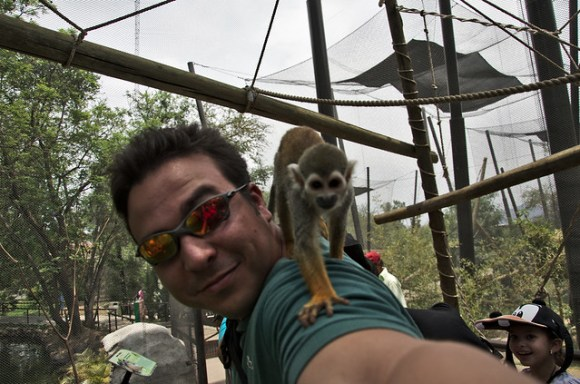 Titi monkey wants my camera