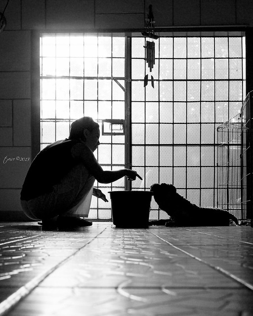 Silhouette shadow of sharpei and owner