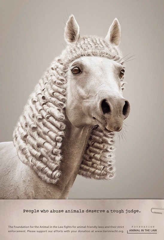 Foundation Animal In The Law - Horse Judge