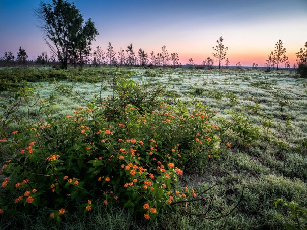 Wildflowers and dewey grass at dawn