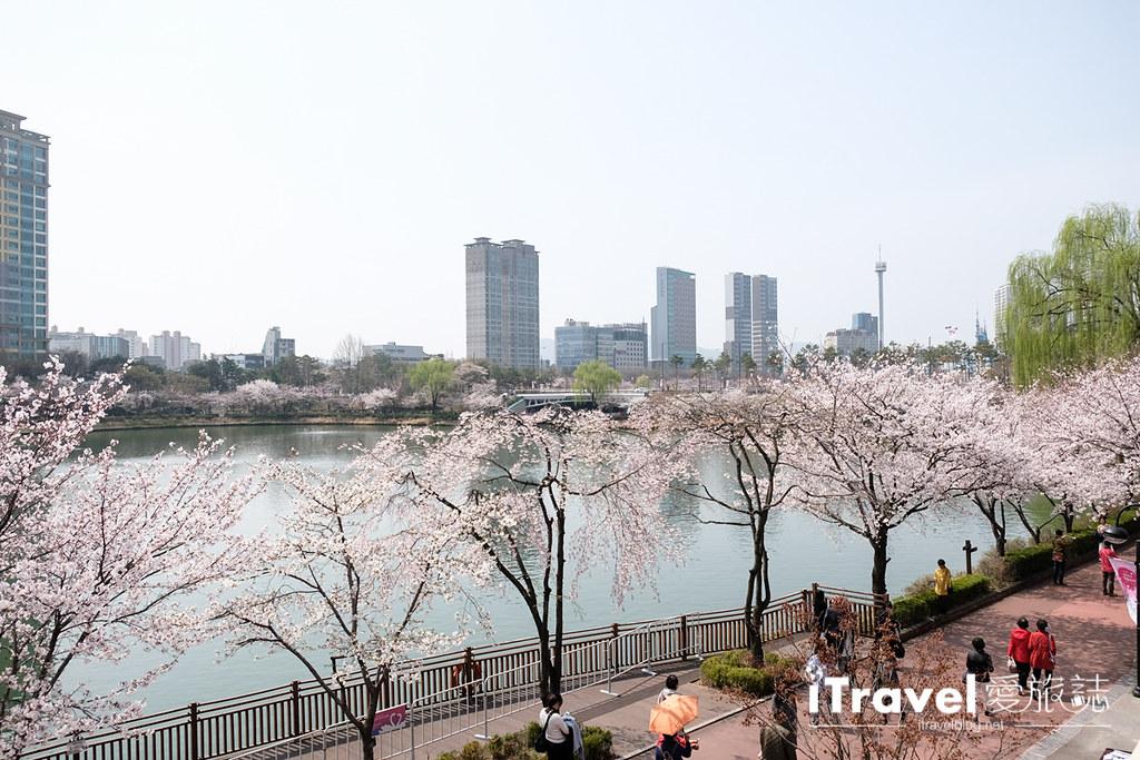 首尔赏樱景点 乐天塔石村湖 (27)
