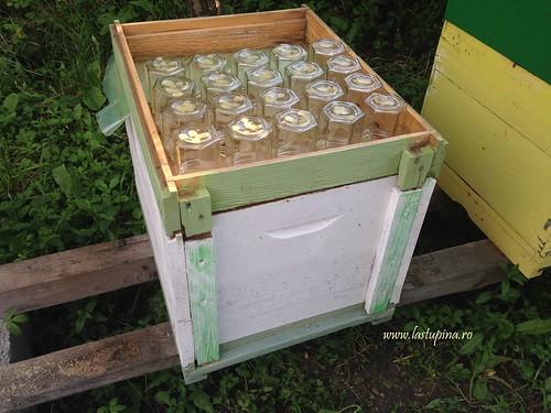 Faguri cu miere in borcan