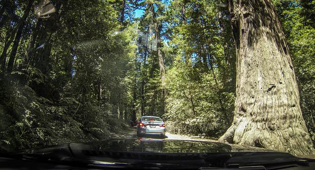 Coastal Redwoods and Fog-032