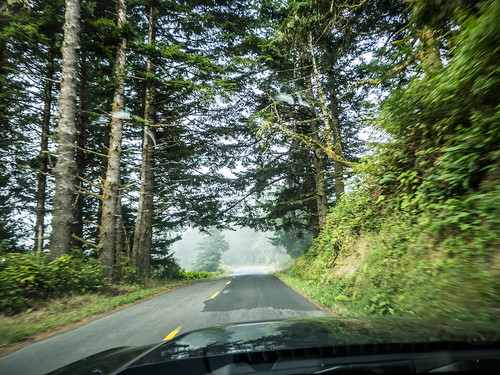 Coastal Redwoods and Fog-112