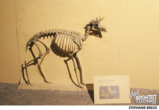 Smithsonian Dinosaur Exhibit Photos Brightest Young Things Stephanie Breijo25