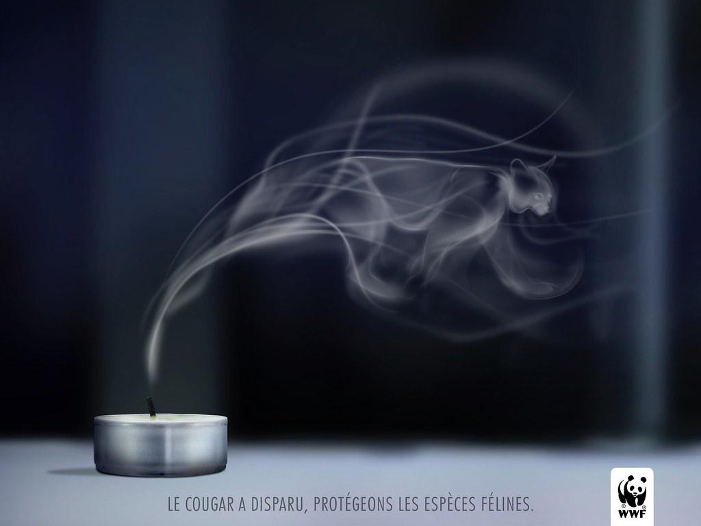 WWF - Smoked Cougar