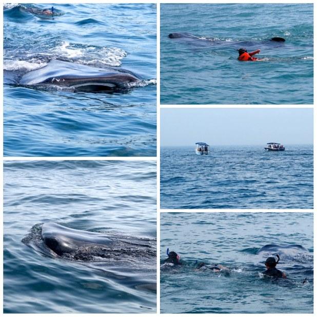Fotos Tiburón ballena