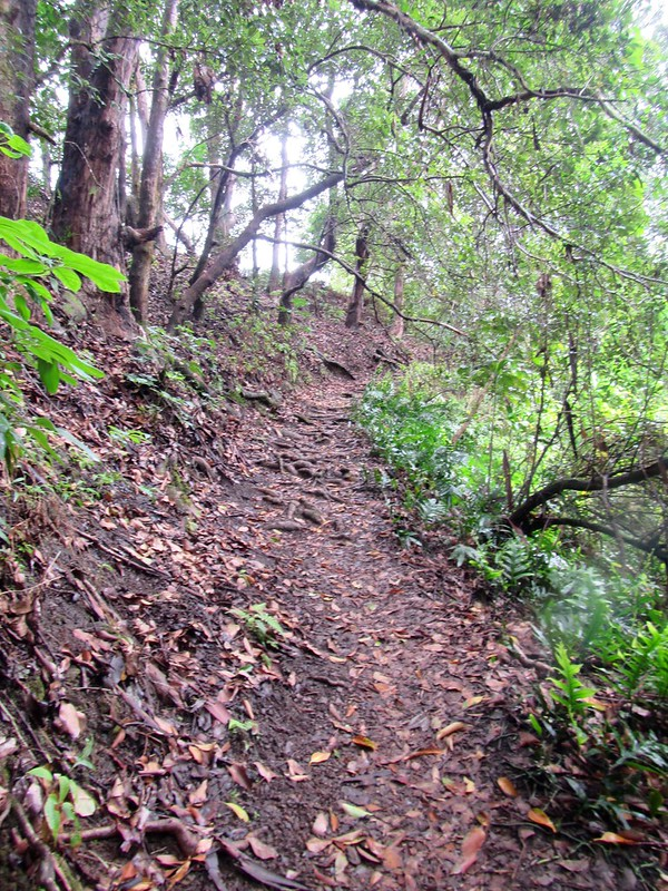 Picture from the Hau'hula Trail