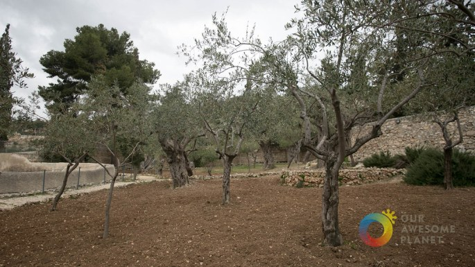 Day 5- Garden of Gethsemane - Our Awesome Planet-15.jpg
