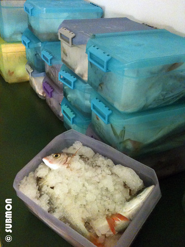 caja de pescado de custodia