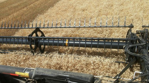 In the combine