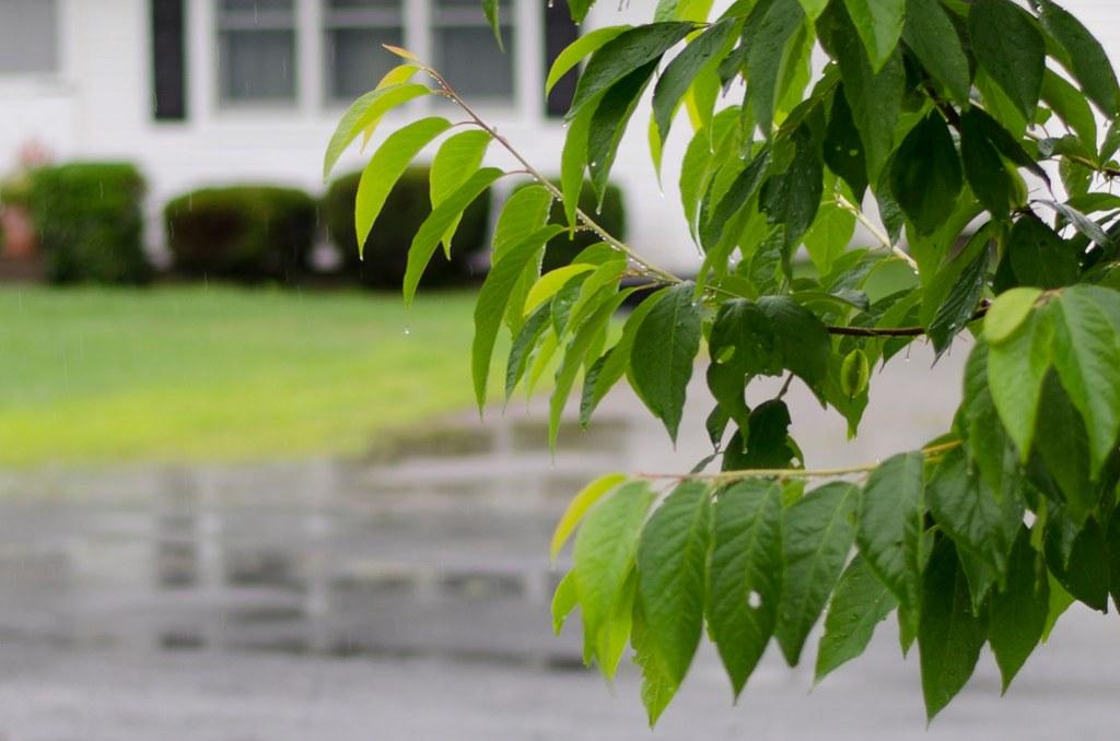 short story // a rainy summer day 3