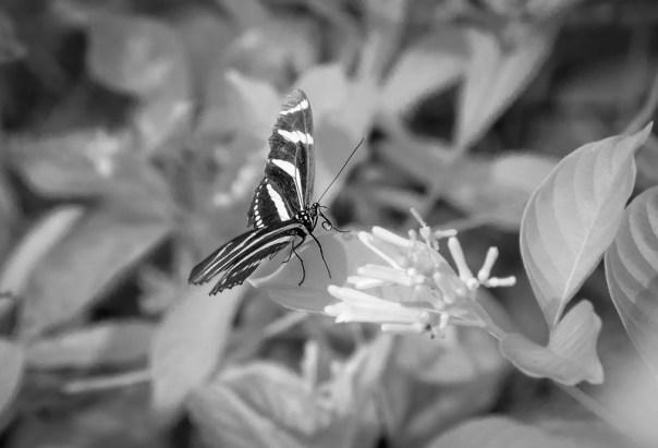 An infrared butterfly