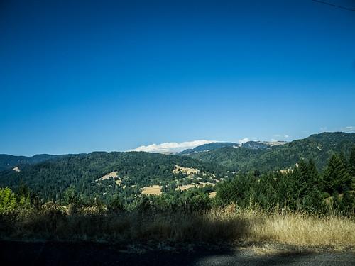 Coastal Redwoods and Fog-088