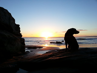 Dornoch Beach Dog Walk