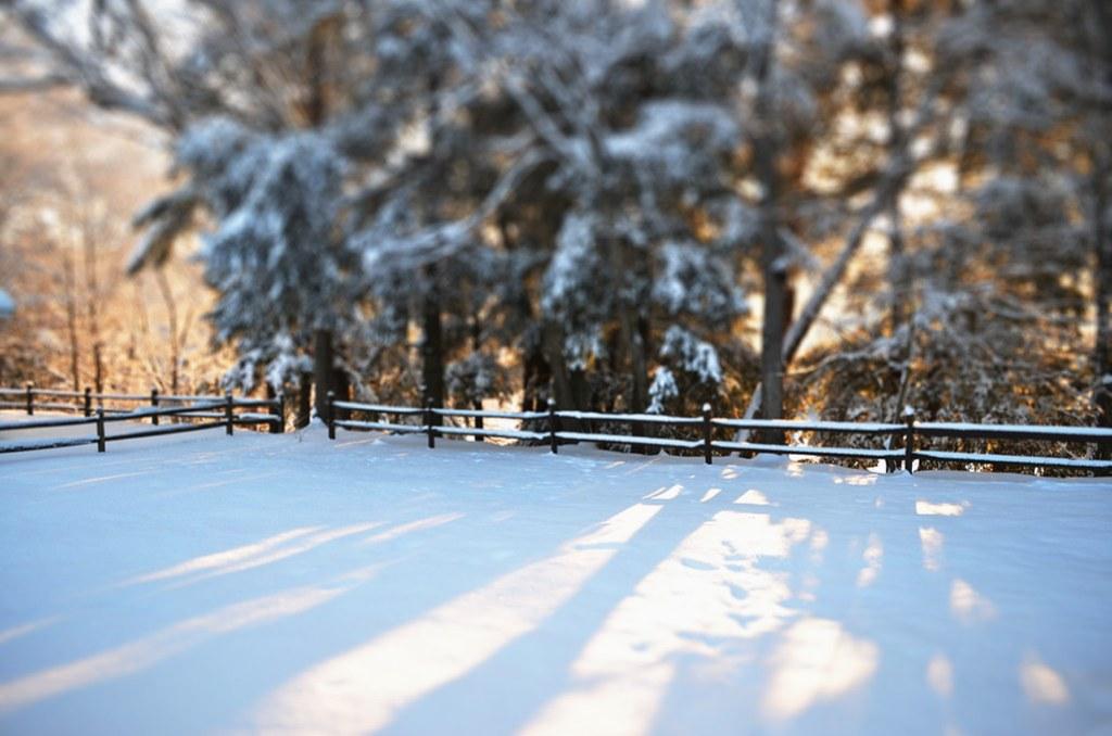 backyard in winter (tilt-shift)