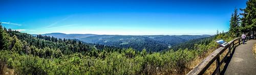 Redwoods and Elk-058