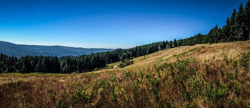 Redwoods and Elk-061