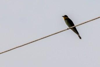 Prachtige vogeltjes overal, alleen hoe kleiner hoe schuwer.