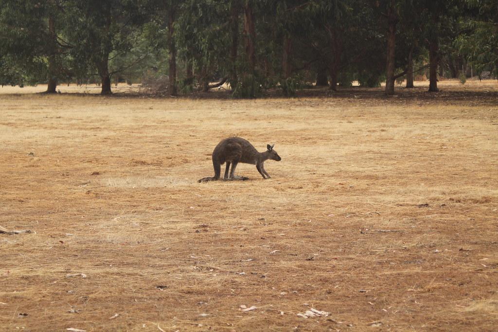 Hanson Bay Wildlife Sanctuary Kangaroo Island - www.fraintesa.it