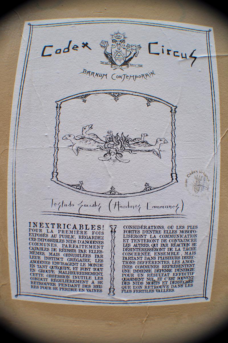 Codex Circus_Testudo Socialis