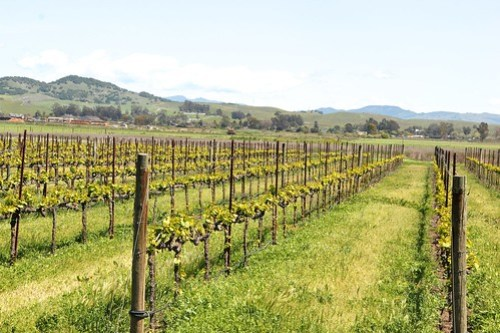 Sonoma County Vineyards and Wine tasting