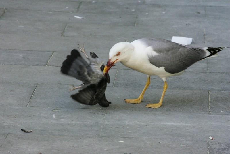 liwasan, square, birds